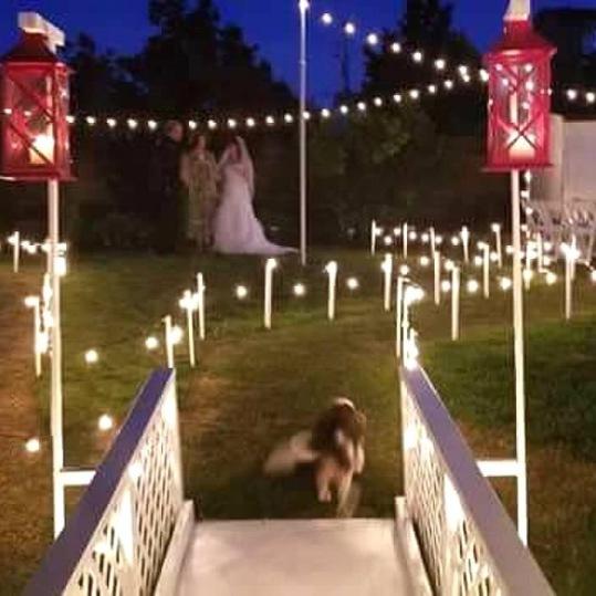A Backyard Wonderland of Lights
